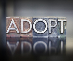 New York Adoption Facts