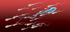 sperm tail tracking